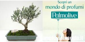 Bonsai di Ulivo omaggio da Palmolive