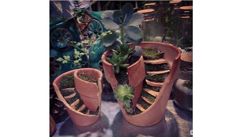 Come trasformare un vaso rotto in un grazioso micro - Cerco piante da giardino in regalo ...