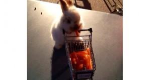 Auchan: buoni sconto sui prodotti che vuoi tu!