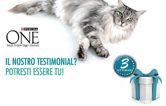 ricerca-tester-purina-one-adult